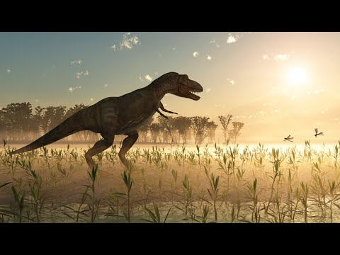 Radiocarbon in dinosaur bones – it shouldn't be there! – Creation Ministries International