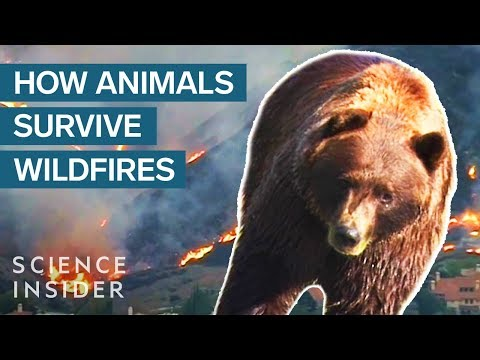 What Happens To Wild Animals During A Wildfire