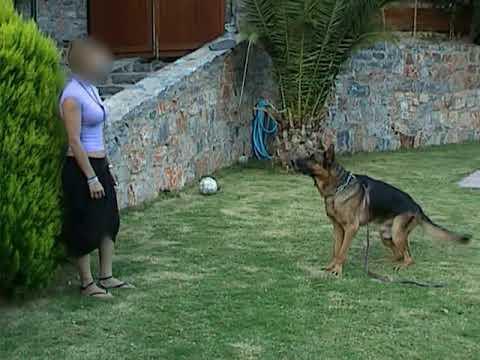 Εκπαίδευση Σκύλων - Ακινητοποίηση - Kreta Rex House