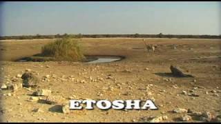 Etosha Namibia  city photo : Etosha National Park NAMIBIA