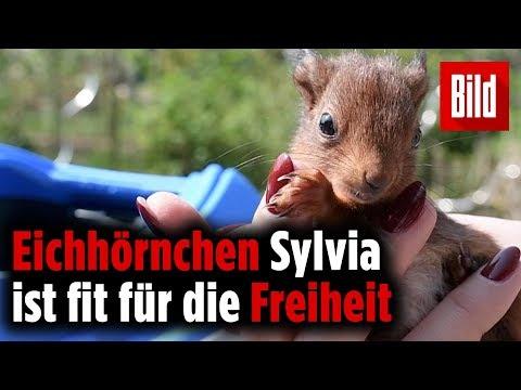Eichhörnchen Sylvia: Nager in Not ist jetzt bereit für die Natur