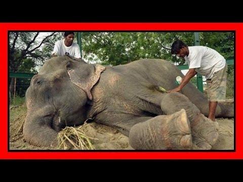 elefante libero dopo 50 anni