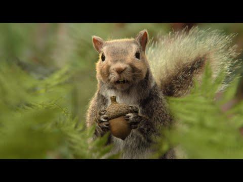 CLIF Nut Butter Filled