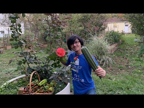 My Mom's Garden Garden Tour Finale P2 (End Of Season Before Frost) | Ep26 Aiman's Backyard Gardening