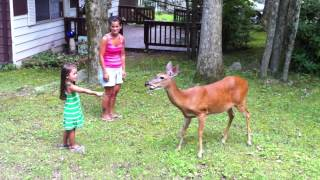 White Haven (PA) United States  City pictures : Kids feed deer in White Haven, P.A.