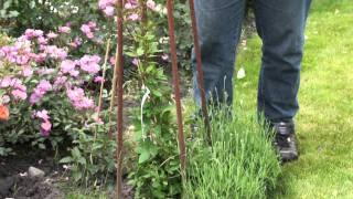 #414 Ideen für eine vertikale Bepflanzung (Glockenrebe, Lavendel, Fuchsie)