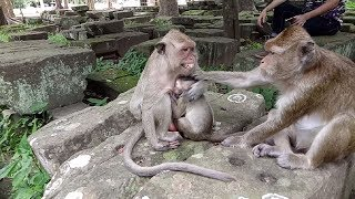 XxX Hot Indian SeX Give Me Your King Crying Baby Monkey Ok ST674 Mono Monkey .3gp mp4 Tamil Video