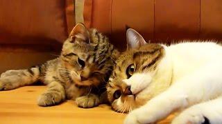 Don T Sleep  Bro    Funny Cats Video
