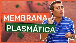 ★ Estude no BIOLOGIA TOTAL: http://www.biologiatotal.com.br★ INSTAGRAM: http://instagram.com/paulojubilut/★ FACEBOOK: http://www.facebook.com/biologiajubilut★ TWITTER: http://twitter.com/Prof_JubilutNesta aula o Prof. Paulo Jubilut fala sobre as funções, as características e as especializações da membrana plasmática.