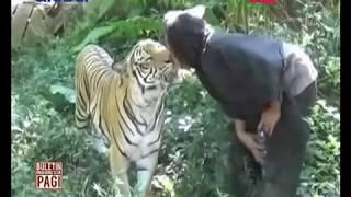 Video Soleh, Pemuda Asal Malang yang Bersahabat Dengan Harimau - BIP 25/05 MP3, 3GP, MP4, WEBM, AVI, FLV Mei 2017