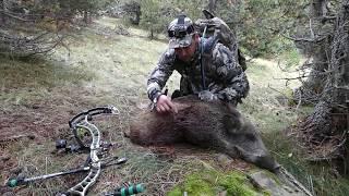 Caza con arco del jabali a rececho 2016Bow hunting wild boar 2016
