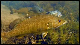 Video End of summer 2018; Friends with wild fish video. MP3, 3GP, MP4, WEBM, AVI, FLV September 2018