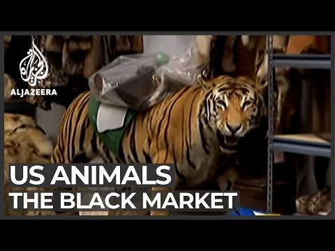 black market - The smuggling of protected wildlife into the US is a multi-billion dollar trade.
