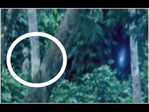 Real Grey Alien Caught On Tape Amazon Rainforrest