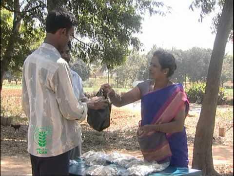 Mushroom Cultivation, Kannada Part 2