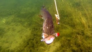 Pike Fishing W Lures: Cannibal Shad Strikes Again. Underwater Attacks.Рыбалка атака щуки под водой.