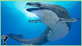 Video What If The Basilosaurus Didn't Go Extinct? MP3, 3GP, MP4, WEBM, AVI, FLV Agustus 2018