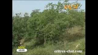 Eritrean Tigre News  2 May 2013 - Eritrea TV