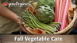 Fall Perennial Vegetable Care