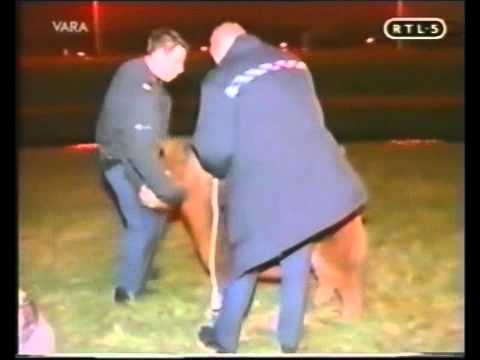 The Dutch Police Attempt to Handle a Very Serious Pony Problem