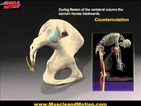 Sacroiliac Joint In Motion!