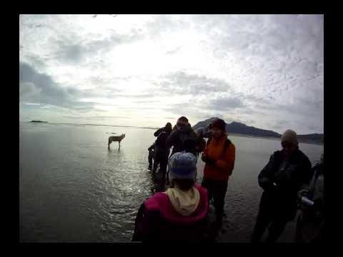 Alaska Wolf Ventures Close