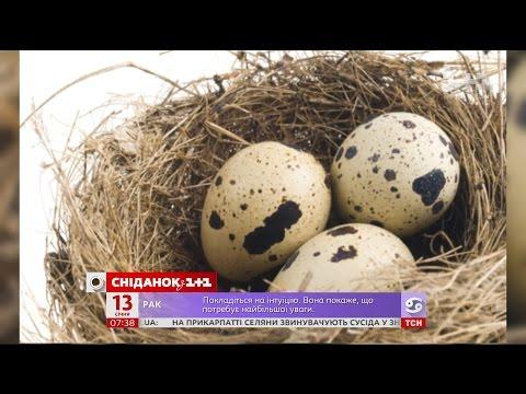 Чому перепелині яйця мають бути у вашому раціоні