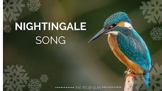 """We leave you alone with soothing and peaceful nightingale songs. The sound of birds always gives peace to man. You feel yourself in nature. You get away from the stress of the day. Enjoyable listening. We would like to thank the user of klankbeeld from freesound.org for voice recordings.● 1 Hour Singing Nightingales  Real Time Bursting Nightingales  No Loop  Nature Sounds 🐦 53● Leave a LIKE, Comment & Subscribe!  ● Join us on Youtube for weekly update: https://goo.gl/Hry5Ut● 1 Hour Relaxing Waterfall with Peaceful Bird Sounds  Nature Sounds Series 🌊 49: https://goo.gl/H6KQhQThe Relax Guys on Social Media:● Facebook: https://www.facebook.com/therelaxguys/● Twitter: https://twitter.com/TheRelaxGuys● Instagram: https://www.instagram.com/therelaxguys/● VK: https://vk.com/therelaxguys● Youtube: https://www.youtube.com/therelaxguyzThank you for the sounds of the natural environment:http://freesound.org/people/klankbeeld/Determination;Blackbird BlackcapWrentomtit Finch ringdove Cuckoowarbler Green woodpeckerBlack Crow Treecreeper (call, 34:27)StarlingChew (34:23)mavisBlack-headed Gull (?) (28:24)DoveGoldcrest (call, 15:17-15:03)RobinGreenfinch (2:53)The blackbird, blackcap, wren and blue tits were practically the most dominant birds in the entire clip (or they were almost hear all the time).The finch, wood pigeon, cuckoo, starling and song thrush only came about halfway slightly higher and the rest were at most 1 to 3 times for it. I also thought something 2x a call of a black-headed gull having heard what was probably a seagull flying overhead on the forest.-~-~~-~~~-~~-~-Please watch: """"1 Hour Crackling Logs for Christmas - Fireplace - Full HD -  Fireplace With Classical Music 🔥 59"""" https://www.youtube.com/watch?v=jzGM25dAmEU-~-~~-~~~-~~-~-"""