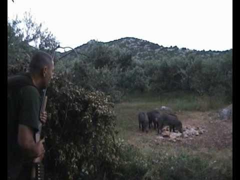 Lov na divlje svinje -Hog Hunting