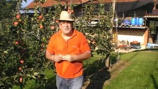 #188 Der richtige Zeitpunkt zur Apfelernte