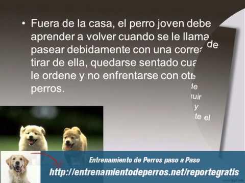 Adiestramiento Canino y Adiestramiento de Perros
