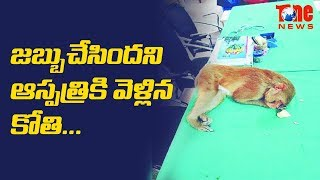 An Injured Monkey Went To A Hospital in Dehradun For Treatment. Watch This Video For Full StoryDid Chandra babu following KCR - https://youtu.be/bkHV7GPdR8EChina Vs India Via Bhutan - https://youtu.be/5R6TujfovK4How GST Created Sensations In The Past In Other Countries? - https://youtu.be/OYp5NLejT74Do you know Mukesh Ambani's Salary ??  -  https://youtu.be/H2bWGwQzQu8Unseen creature in Odisha ?  - https://youtu.be/IY9oWBfnifI