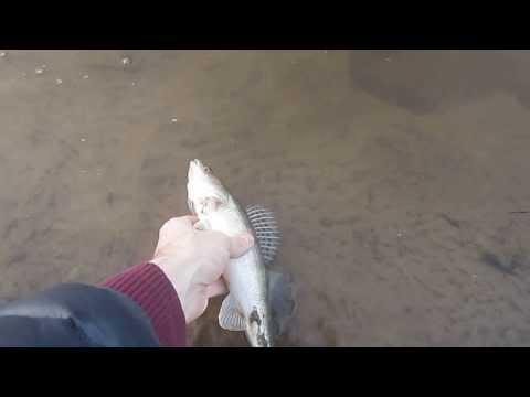 рыбалка на пышме тюмень июнь 2016