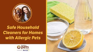 Safe Household Cleaners for Homes with Allergic Pets