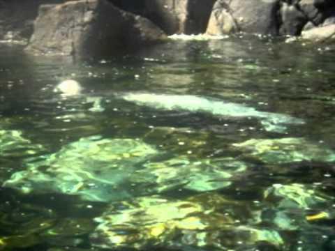 Go To: Reserva Natural das Ilhas Desertas