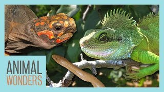 Reptile Update | With Baby Rubber Boa! by Animal Wonders