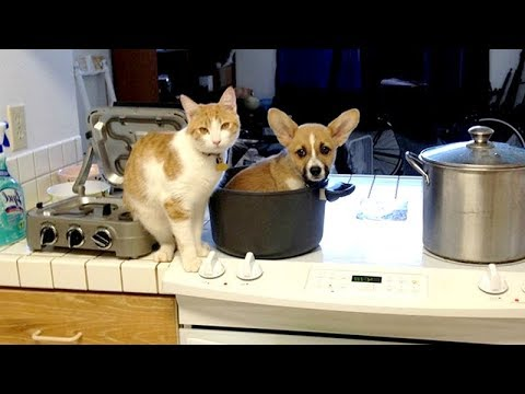 Funny animals - Funny VIRAL ANIMAL VIDEOS - You'll LAUGH LIKE NEVER BEFORE