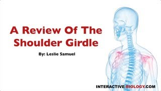 080 A Review Of The Shoulder Girdle
