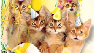Happy Birthday♫ Meaw ♪