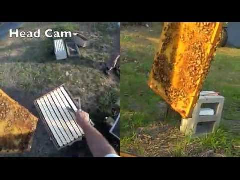 FatBeeMan Hive Inspection and Splitting