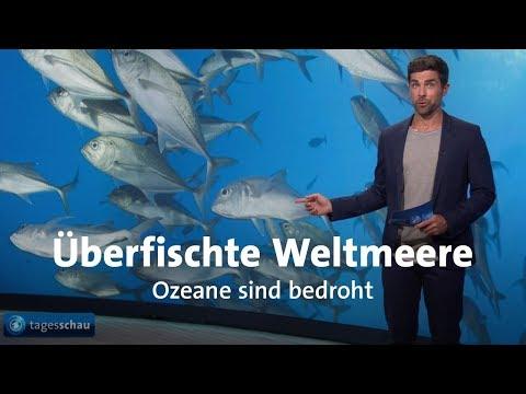Leere Meere - Wie bedroht sind Fischbestände?
