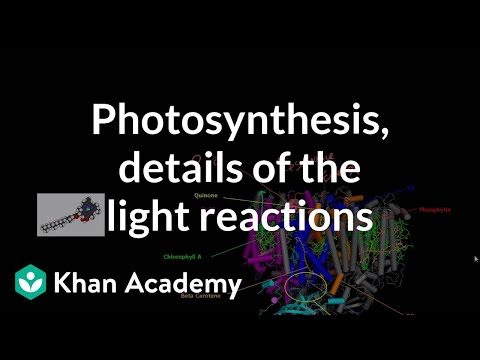 reactions of photosythesis Start studying the reactions of photosysthesis (section 8-3) learn vocabulary, terms, and more with flashcards, games, and other study tools.
