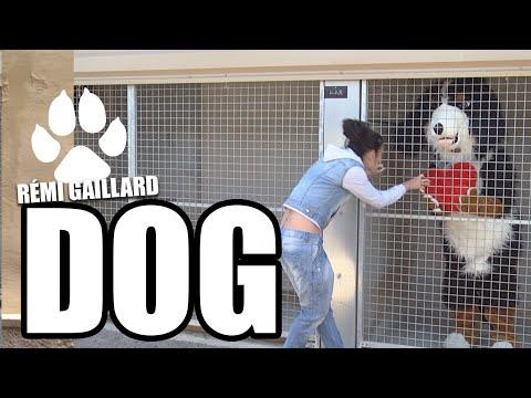 DOG – Remi Gaillard vauhdissa