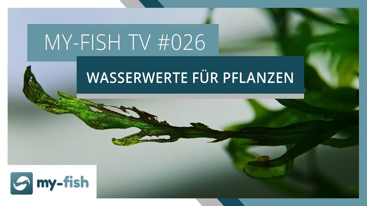 my-fish TV - Deine Nr. 1 Anlaufstelle für alle Themen rund um die Aquaristik 38