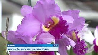 Exposição Nacional de Orquídeas traz mais de dois mil exemplares a Bauru