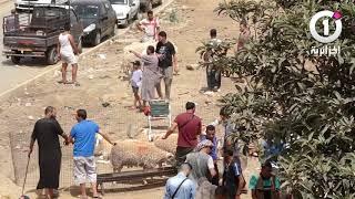 شاهد أجواء سوق الكباش في الجزائر العاصمة .. أجواء استثنائية لهذه سنة