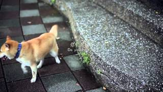 """""""Never Say Goodbye"""" - A Story About Stray Dogs That Will Break Your Heart"""
