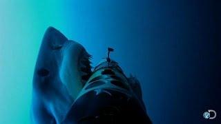 Greg Skomal and the REMUS SharkCam team film the secret hunting behavior of the largest great white sharks on earth.  For more Shark Week, visit http://www....