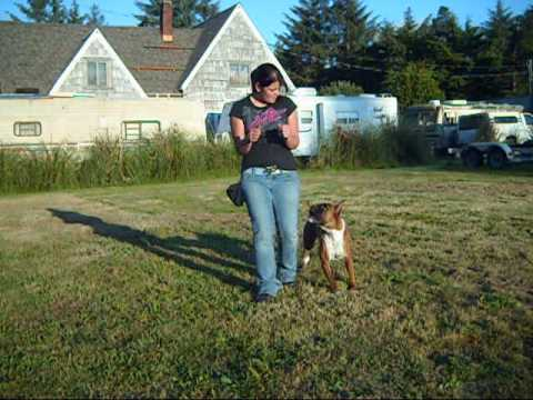 awesome boxer dog tricks