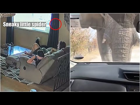 Top 10 Scary Moments Caught on Camera   Close Calls